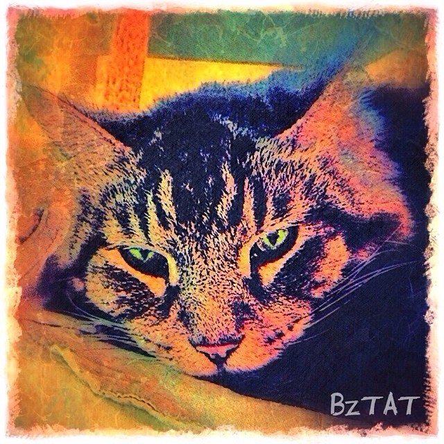 9-Digital-pet-portrait-cat-art-calendar-BZTAT