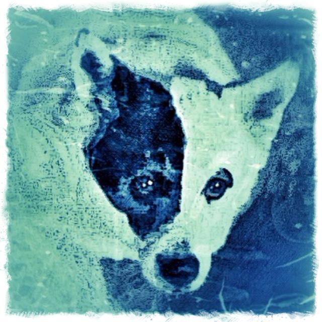 Black and White Dog - Custom Digital Fine Art Pet Portrait by Animal Artist BZTAT