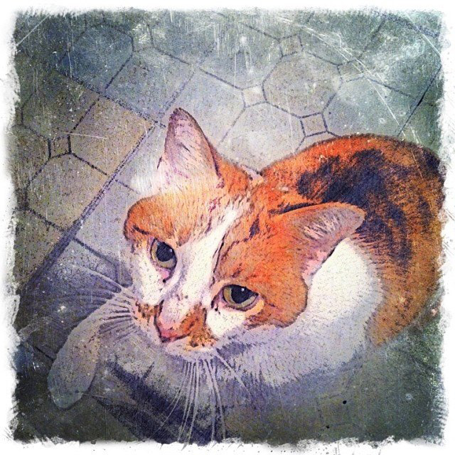 Custom Digital Ginger and White Cat - Fine Art Pet Portrait by Animal Artist BZTAT