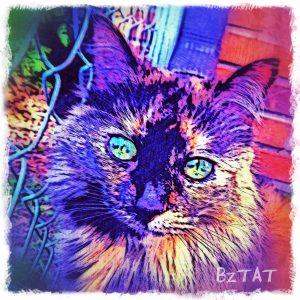 Tortoise Shell maine Coon Cat Digital Portrait by BZTAT