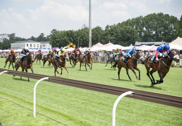 Six reasons to visit the Gauteng Sansui Summer Cup