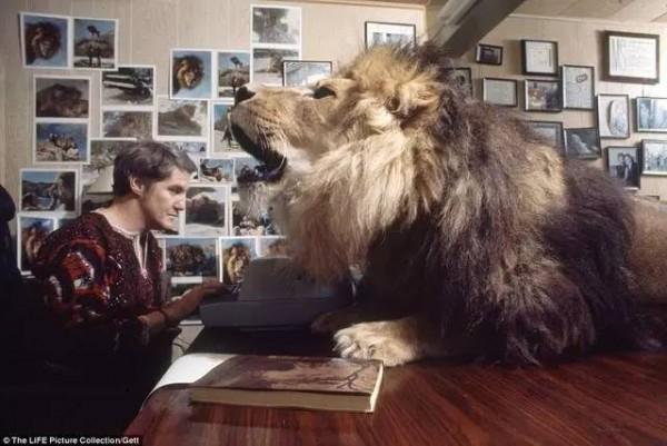 和獅子一起生活?揭露照片背後的殘酷真相...他們一家人後悔也來不及了!