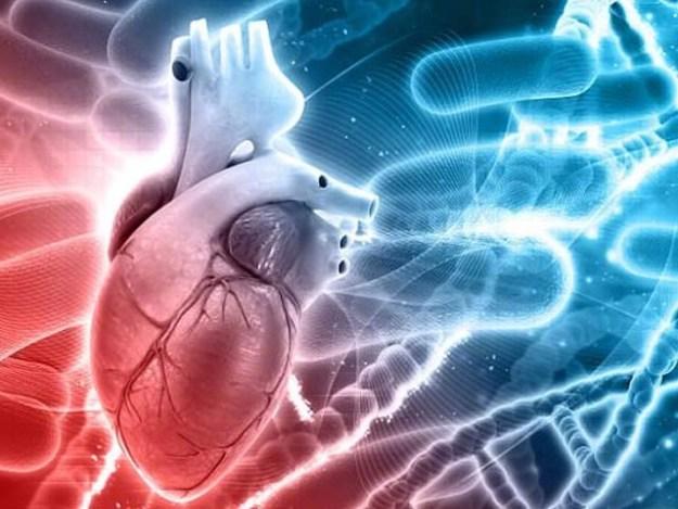 جین میکسس کوئی پروٹین تو نہیں بناتا لیکن وہ خاص پروٹین کو ہدایات دے کر خون سے کولیسٹرول صاف کرنے میں اہم مدد فراہم کرتا ہے۔ فوٹو: فائل