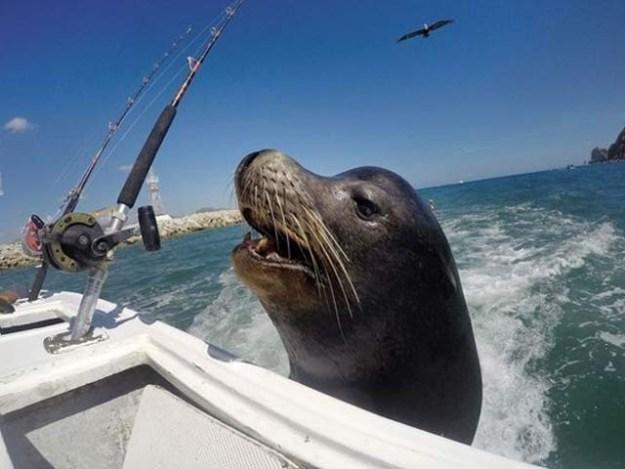 میکسیکو کے ساحل کے قریب ایک سی لائن جمپ کرکے کشتی پر سوار ہوگیا اور وہاں موجود لوگوں سے مچھلی مانگنے لگا۔ فوٹو: بشکریہ فرینکی گرانٹ