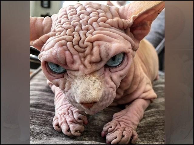 دنیا کی سب سے خوفناک بلی