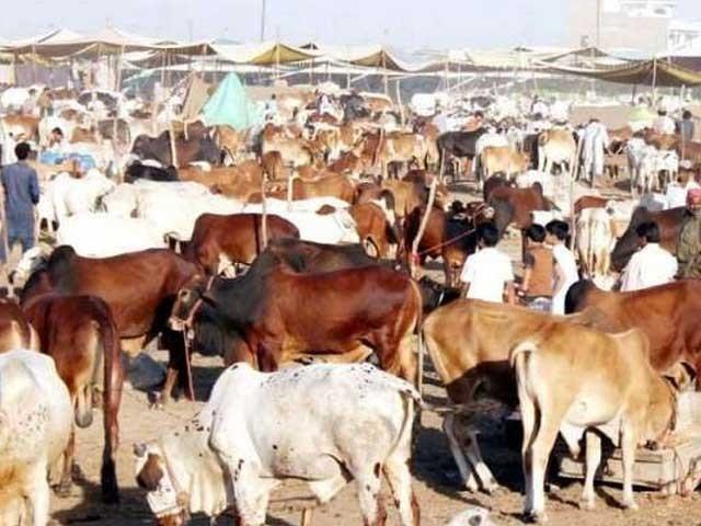 آن لائن قربانی کے جانوروں کی قیمتوں میں 25 فیصد تک اضافہ