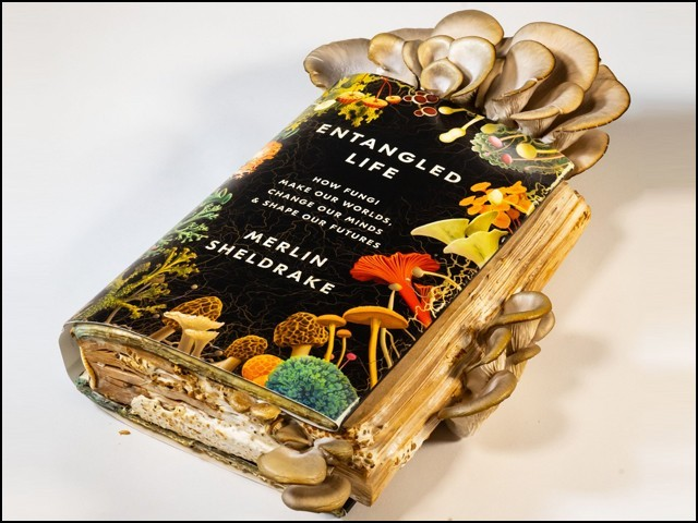 کھمبیوں کے بارے میں اس کتاب کو پکا کر ''کھایا'' بھی جاسکتا ہے