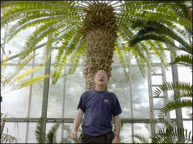 دنیا کا سب سے اکیلا اور ''کنوارا'' درخت، اپنی دلہن کا منتظر
