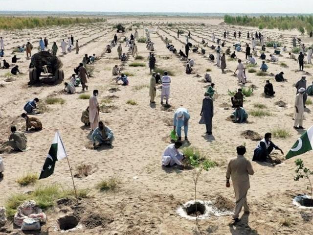 خیبر میں مظاہرین کا شجر کاری مہم پر دھاوا، تمام پودے اکھاڑ دیے