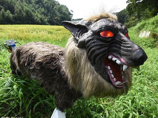 گاؤں کو ریچھوں سے بچانے کے لیے'خوفناک بھیڑیا روبوٹ' نصب