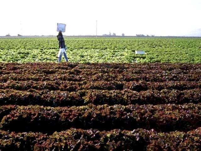 معیشت کی پائیدار نمو زراعت کی ترقی سے وابستہ