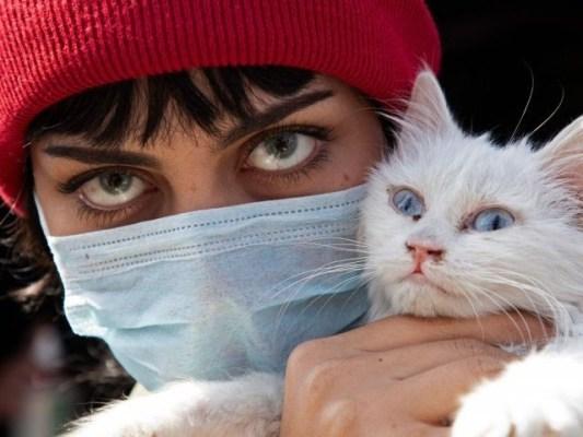 نئی امریکی تحقیق نے بلی کو سنگین دماغی عارضے کاممکنہ محرک قرار دے دیا ہے۔ (فوٹو فائل)