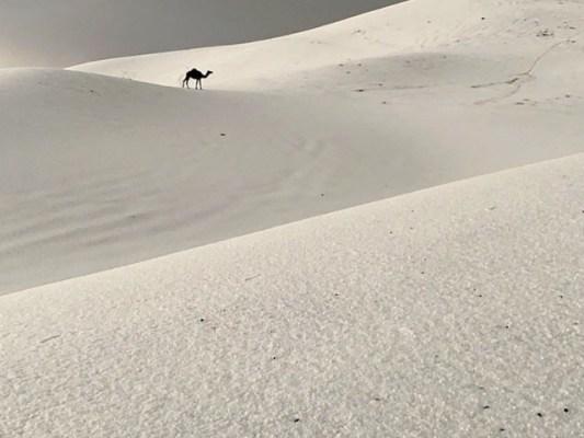 پہاڑوں اور نخلستان نے برف کی چادر اوڑھ لی، فوٹو: ٹوئٹر