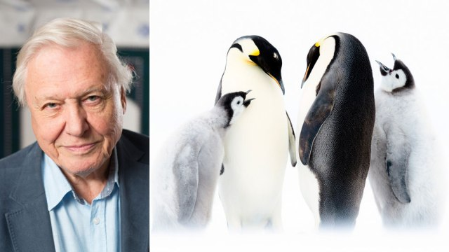 Dynasties: 'Attenborough would have rescued penguins'