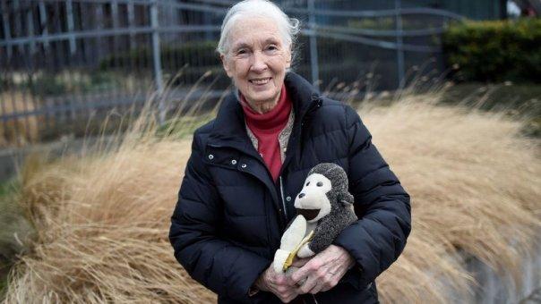 Jane Goodall con su famoso muñeco de mono en 2018.