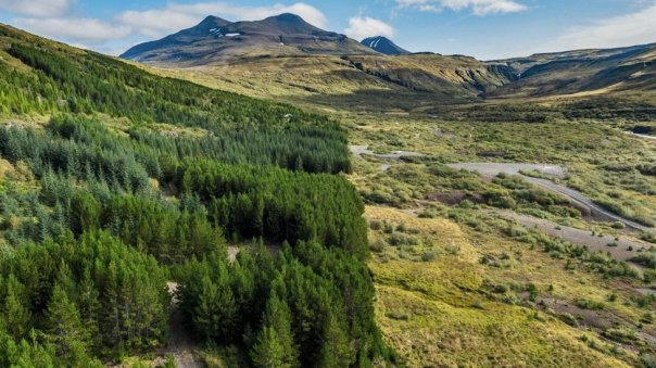 Bosque Islandia