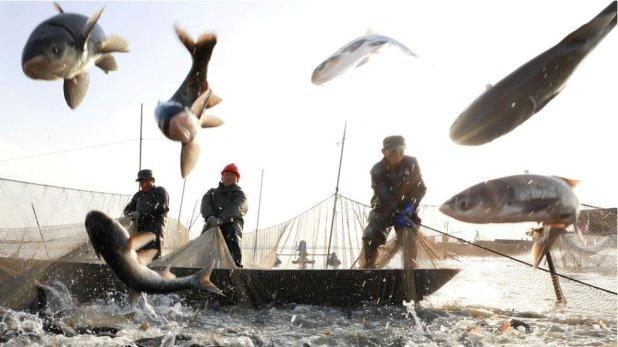 El gobierno chino entrega subsidios a su flota pesquera.