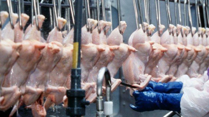 अर्कांसस, अमेरिका में चिकन संसाधित किया जा रहा है