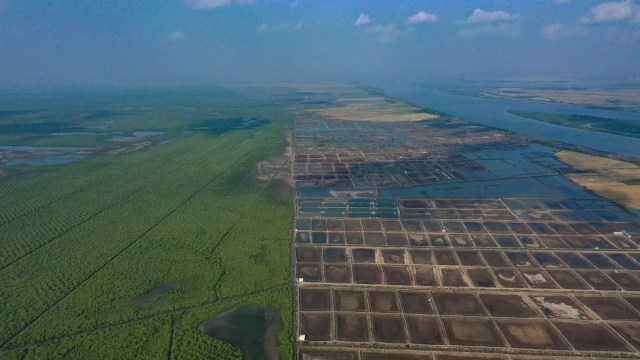 An aerial view of a mangrove forest on the left and a patchwork of brown aquaculture ponds on the right