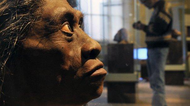 Recreación del rostro del Homo floresiensis