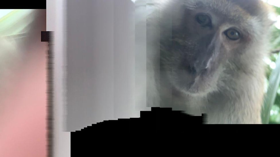 Another photo of a monkey Mr Zackrydz says he found on his phone
