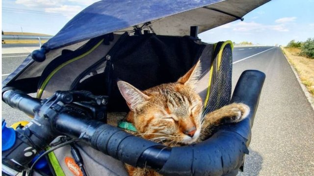 Just a cat, a bike and the open road