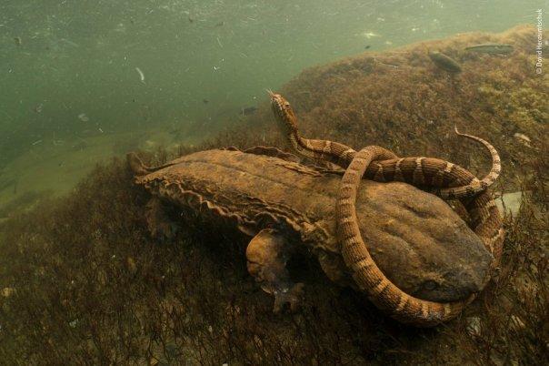 Salamandra y serpiente