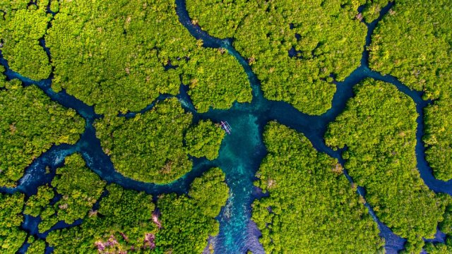 An aerial view of a mangrove forest with various river tributaries