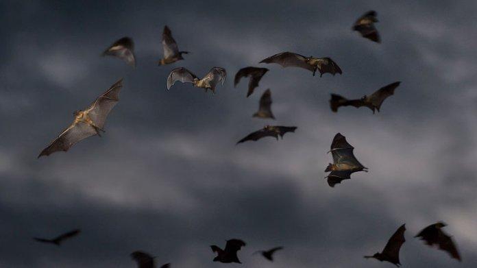 Bats, 2014