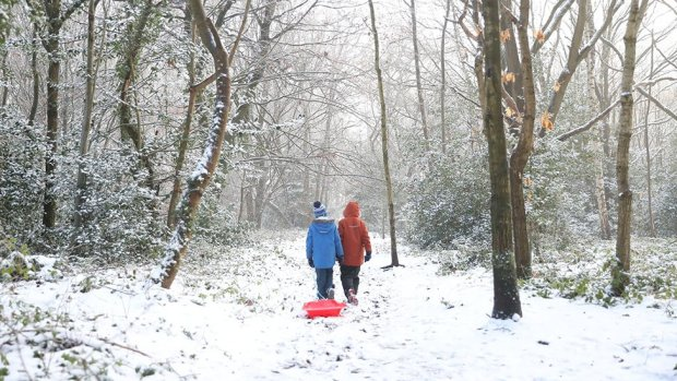 Two children drag a sledge through woods on Knutsford Heath in Cheshire