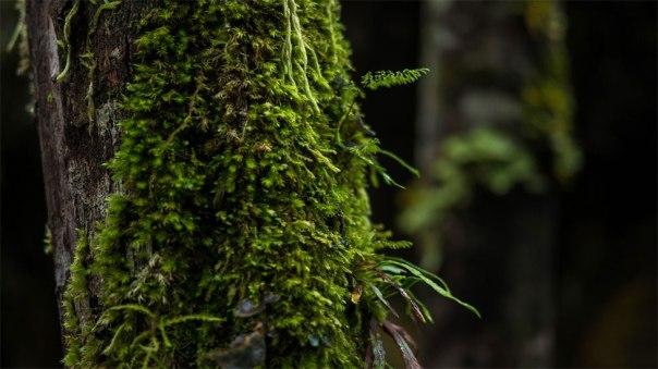 Tronco de un árbol