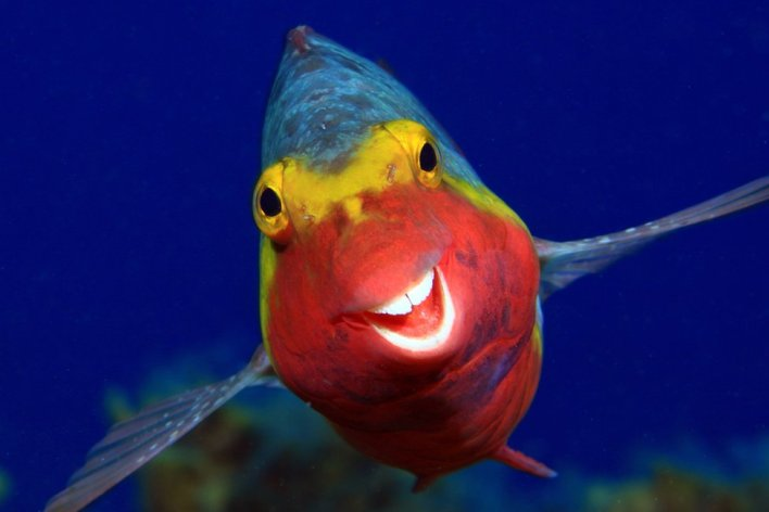 A fish appearing to smile at the camera (Foto via www.comedywildlifephoto.com)