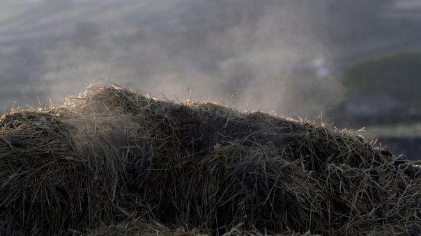 Ensilado de hierba.