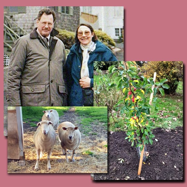 John and Denise in 2000, their sheep and the crab apple tree