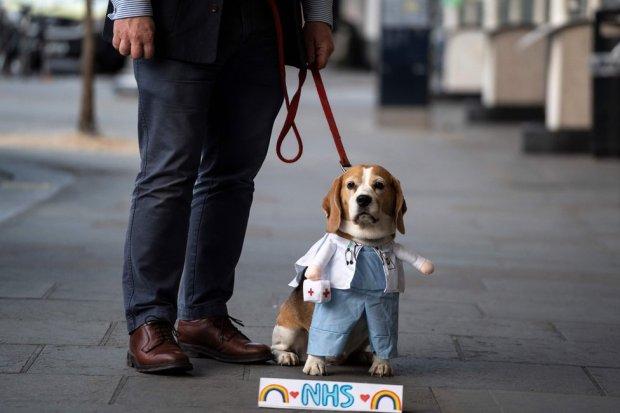 A dog wears a doctor's uniform