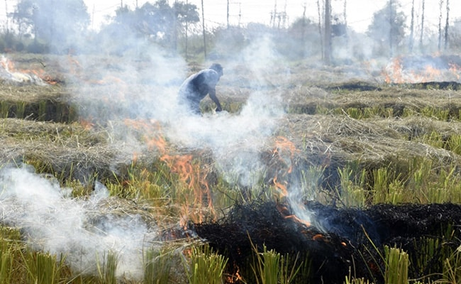 49% Jump In Stubble Burning Cases In Punjab This Paddy Season: Data