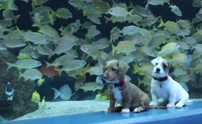 "Two Puppies Visit An Aquarium. Video Has Internet Saying ""Aww"""