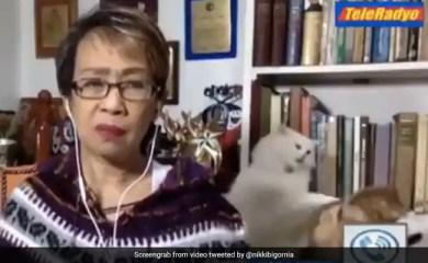 वायरल वीडियो: रिपोर्टर ने लाइव टीवी पर शांत रहने की कोशिश की क्योंकि उसके बिल्लों ने जमकर लड़ाई की