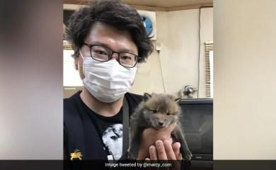 ट्विटर ने खोया पिल्ला का मालिक खोजने के लिए ट्विटर की मदद ली, आश्चर्यचकित हो गया