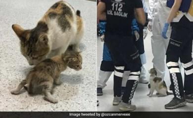 आवारा बिल्ली अस्पताल में बिल्ली का बच्चा काटती है, उनकी सहायता के लिए मेडिसिन भागती है