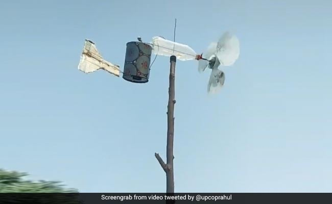 """This Desi """"Jugaad"""" To Keep Locusts Away Is Massively Viral"""