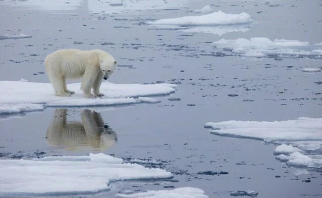 नॉर्वे का आर्कटिक द्वीपसमूह 40 वर्षों में सबसे अधिक तापमान का रिकॉर्ड बनाया