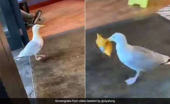 Seagull Runs Away With Stolen Snack In Hilarious Video