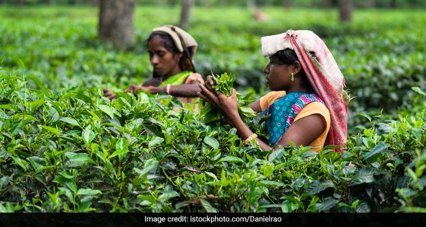 Assam Tea Estates See Over 300% Spike In Covid Cases In Last 10 Days