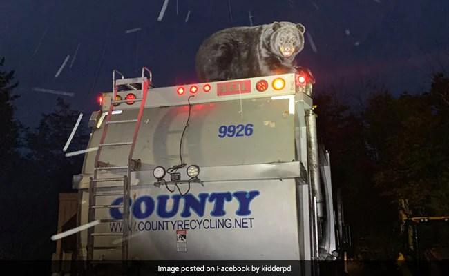 कूड़े से भरे ट्रक पर चढ़े भालू के रिएक्शन देख झूमे लोग, मस्ती करते पहुंचा पुलिस स्टेशन, देखें वायरल Pics