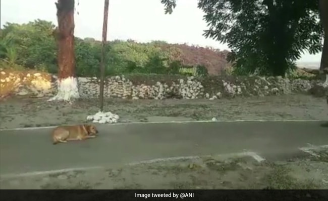 BSF To Train 2 Indian Dog Breeds For Border Patrolling