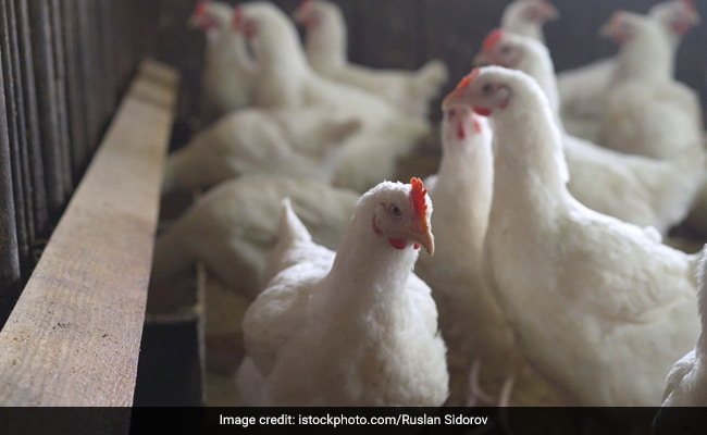Russia Reports First Cases Of Bird Flu In Humans