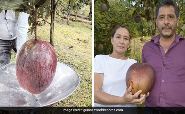 Colombian Farmers Enter Guinness Book For Growing World's Heaviest Mango | Latest News Live | Find the all top headlines, breaking news for free online May 1, 2021