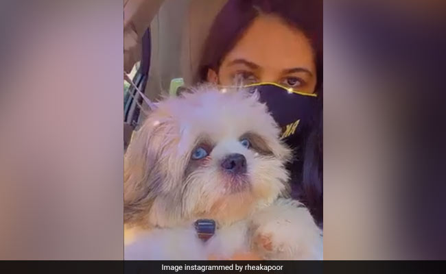 Rhea Kapoor's Adorable Pet Dogs Are 'Up To No Good.' The Internet Can't Even...