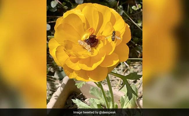 देखें: विश्व मधुमक्खी दिवस पर, ट्विटर पर अद्भुत DYK Bee Pics, वीडियो के साथ चर्चा